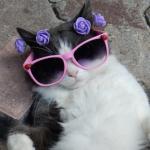 Le libre arbitre et mes nouvelles lunettes