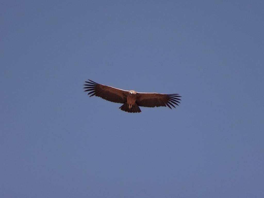 Méditation - Le point de vue du Condor
